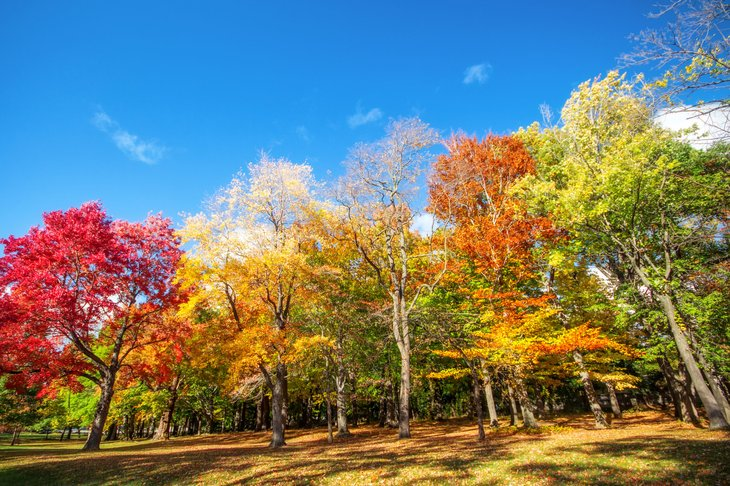 Autumn leaves in Rochester, New York