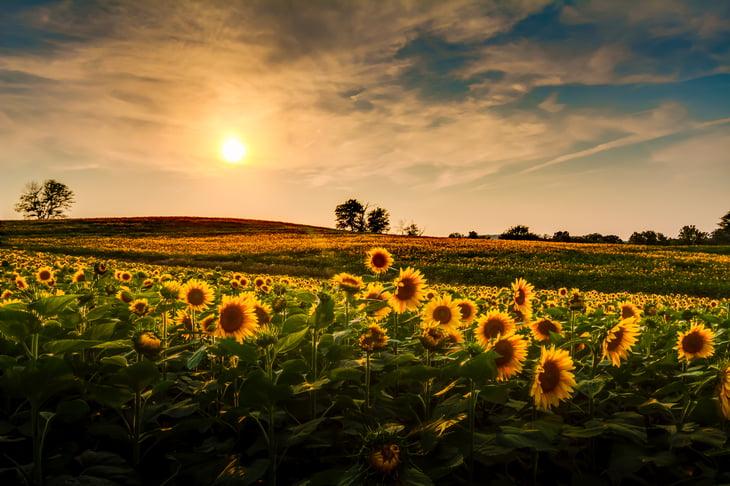 TommyBrison / Shutterstock.com